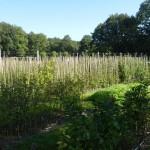 Anzuchtgarten